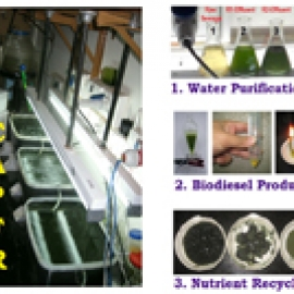 Novel Algal Bioreactor For Wastewater Treatment An