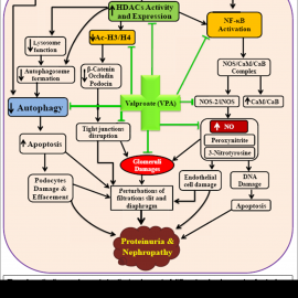 Valproic Acid Prevents Progression Of The Diabetic